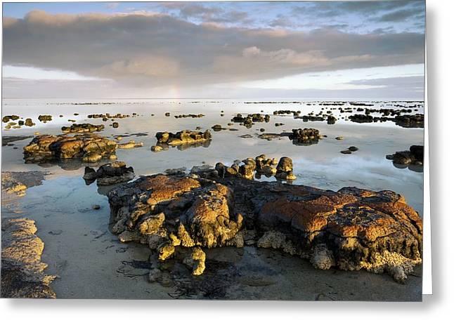 Shark Bay Greeting Cards - Stromatolites In Australia Greeting Card by Bob Gibbons