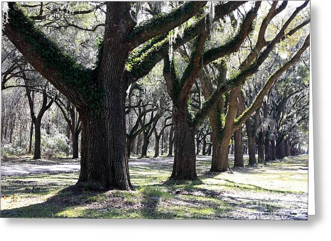 Old Savannah With Moss Greeting Cards - Strong and Proud in the South Greeting Card by Carol Groenen