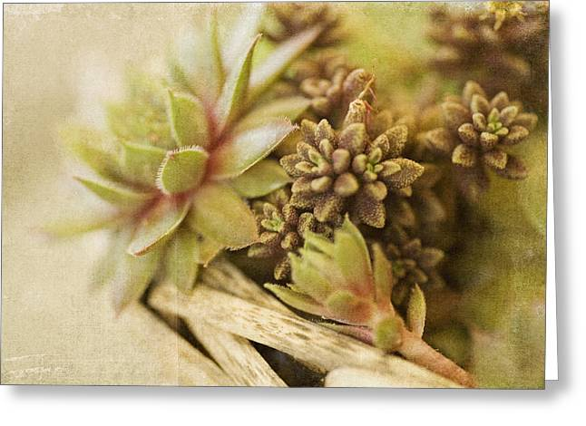 Succulents Greeting Card by Bonnie Bruno
