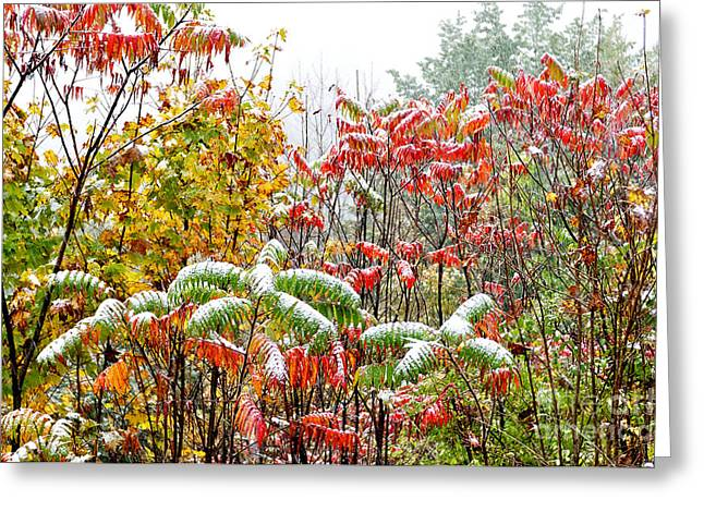 Glabra Greeting Cards - Sumac and Snow along the Highland Scenic Highway Greeting Card by Thomas R Fletcher