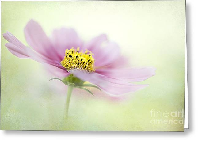 Close Focus Floral Greeting Cards - Summer Breeze Greeting Card by Jacky Parker
