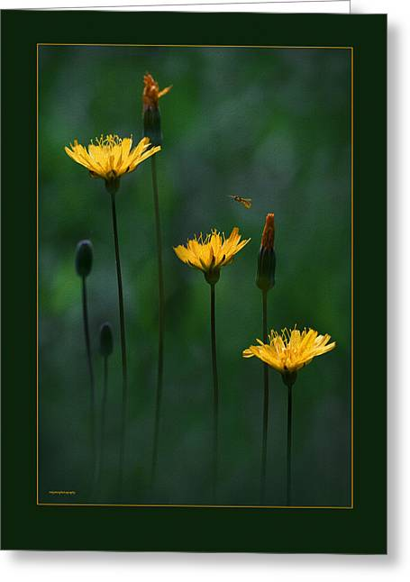 Sweat Greeting Cards - Summer Dining Greeting Card by Ron Jones