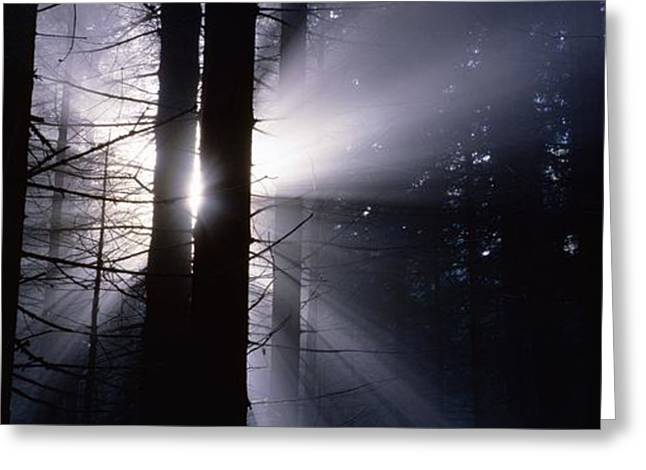 Sun breaking through mists Greeting Card by Intensivelight
