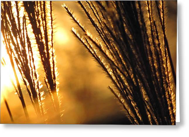 Panoramic Greeting Cards - Sun Grass Wind Greeting Card by Amy Tyler