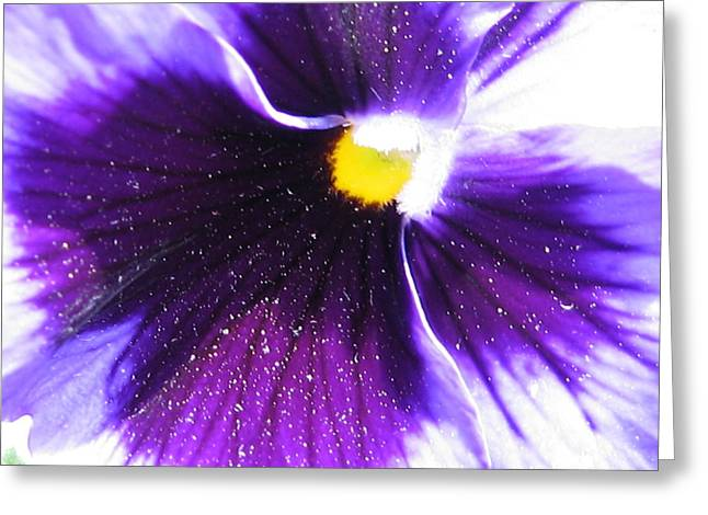 Sunburst Floral Still Life Greeting Cards - Sunburst Pansy Greeting Card by Tracy Male