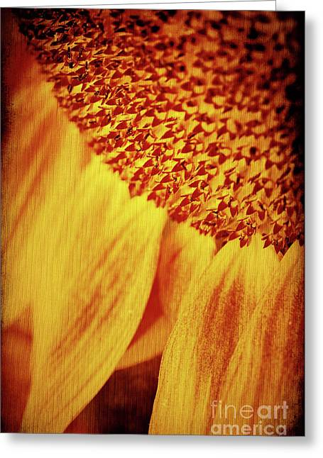 Texture Floral Greeting Cards - Sunflower Greeting Card by Silvia Ganora