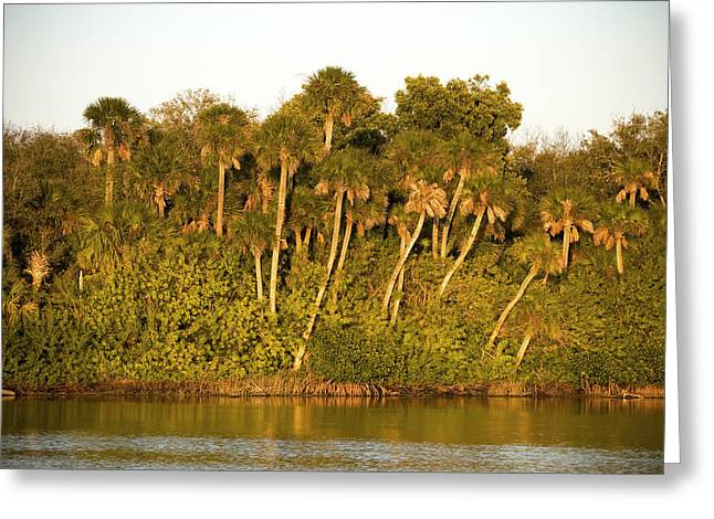 Wildlife Refuge. Greeting Cards - Sunset Palm Trees Greeting Card by Rich Franco