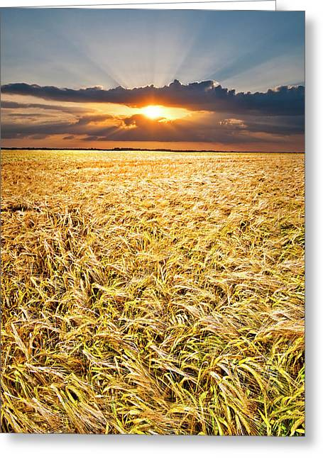 Field. Cloud Greeting Cards - Sunset Wheat Greeting Card by Meirion Matthias