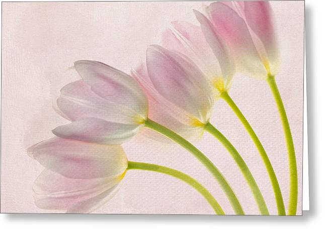 Pink Tulip Greeting Cards - Sweep Me Off My Feet Greeting Card by Rebecca Cozart