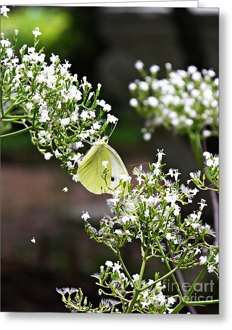 Raw Photography Greeting Cards - Sweet Summer Greeting Card by Sarah Loft