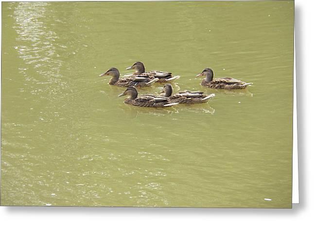 Swimming Ducks Greeting Card by Corinne Elizabeth Cowherd
