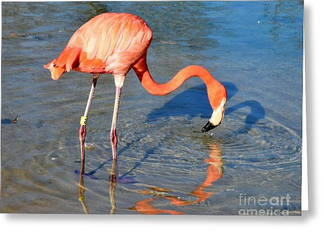 Struckle Greeting Cards - Taking A Drink Greeting Card by Kathleen Struckle