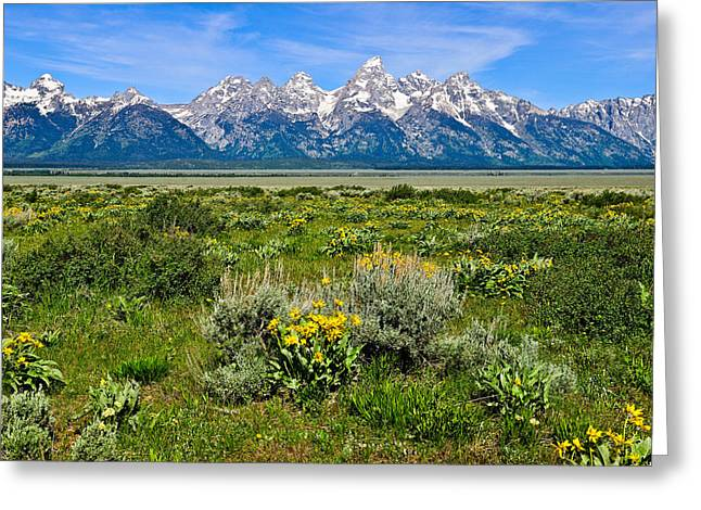 Landscape Art Greeting Cards - Teton Peaks and Flowers Greeting Card by Greg Norrell