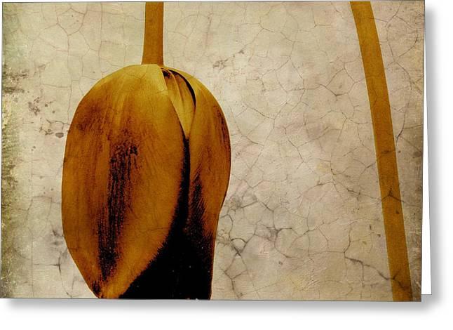 Figure Drawing Photographs Greeting Cards - Textured tulip Greeting Card by Bernard Jaubert