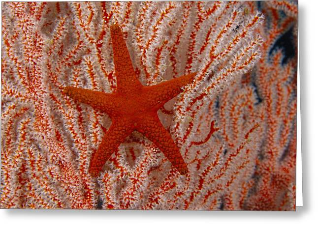 Indica Greeting Cards - Thailand, Marine Life Greeting Card by Dave Fleetham - Printscapes
