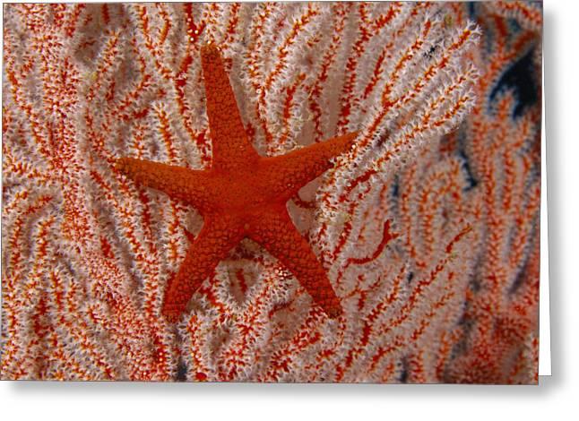 Dave Fleetham Greeting Cards - Thailand, Marine Life Greeting Card by Dave Fleetham - Printscapes