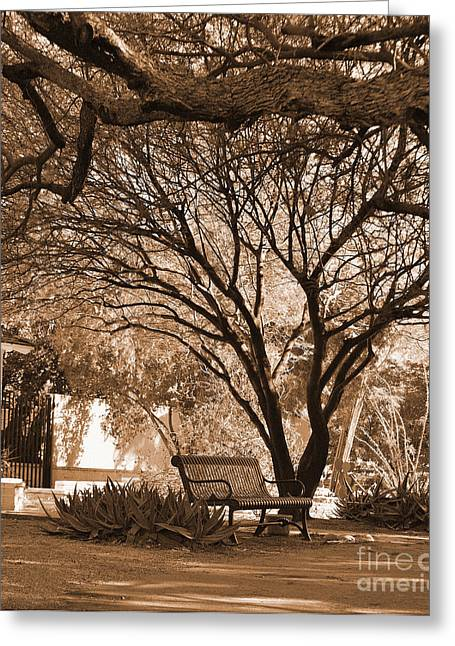 Outlook Greeting Cards - The Lonely Bench Greeting Card by Donna Van Vlack