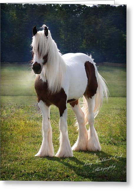 Gypsy Horse Greeting Cards - The Lovely Cristal Greeting Card by Terry Kirkland Cook