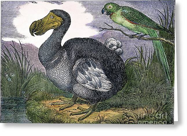The Mauritius Dodo Greeting Card by Granger
