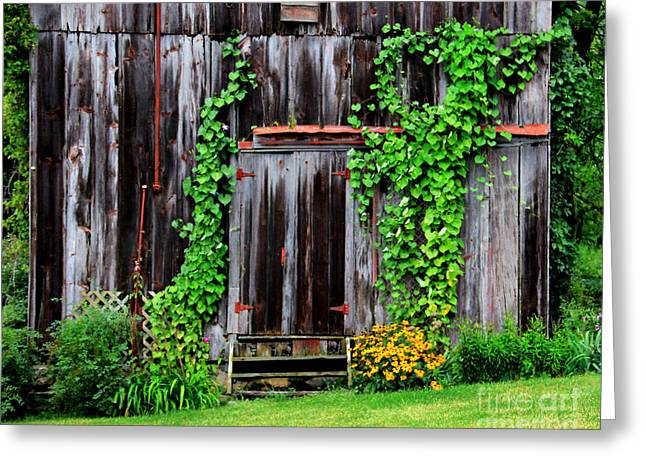 Shed Greeting Cards - The Old Shed Greeting Card by Perry Webster