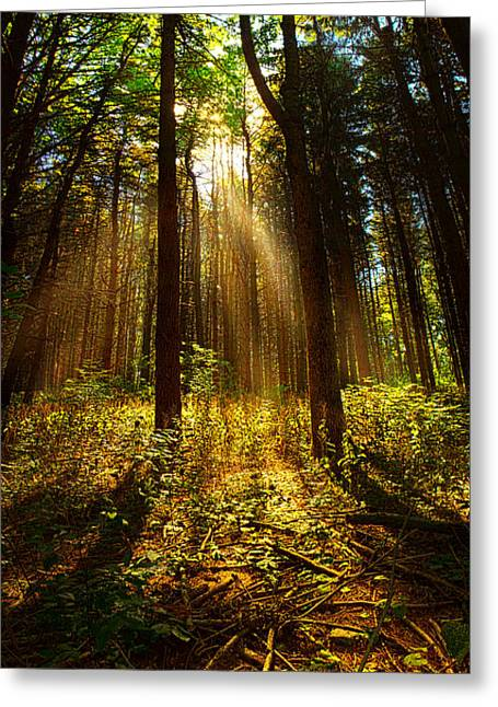 Geographic Greeting Cards - The Pines Greeting Card by Phil Koch