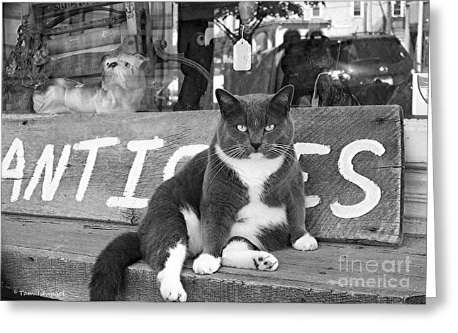 Photos Of Cats Greeting Cards - The Shop Cat Greeting Card by Tam Ishmael - Eizman