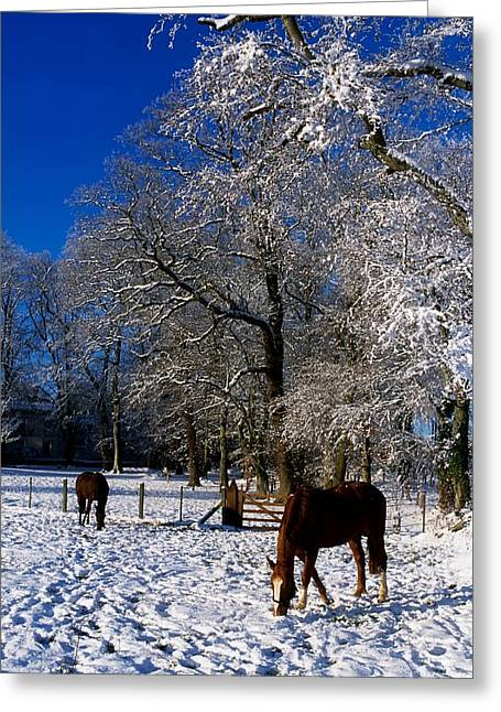 Wood Carving Greeting Cards - Thoroughbred Horses, Mares In Snow Greeting Card by The Irish Image Collection