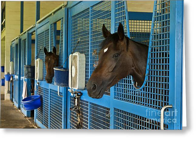 Race Horse Greeting Cards - Thoroughbred Greeting Card by John Greim