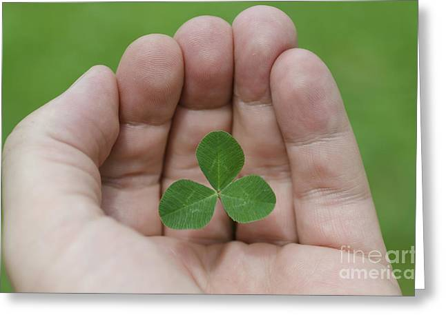 Three Leaves Greeting Cards - Three leaf clover Greeting Card by Mats Silvan