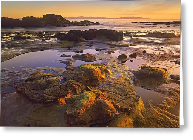 Juan De Fuca Provincial Park Greeting Cards - Tidepools Exposed At Low Tide Botanical Greeting Card by Tim Fitzharris
