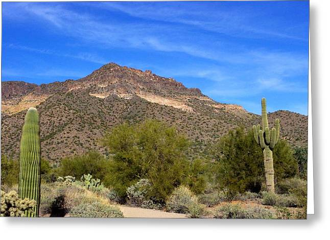 David Rizzo Greeting Cards - Tonto Forest Greeting Card by David Rizzo