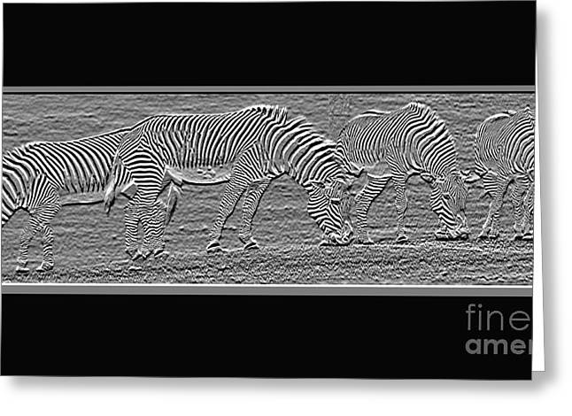 Zebra Grazing Greeting Cards - Transparent Zebras Greeting Card by Robert Meanor