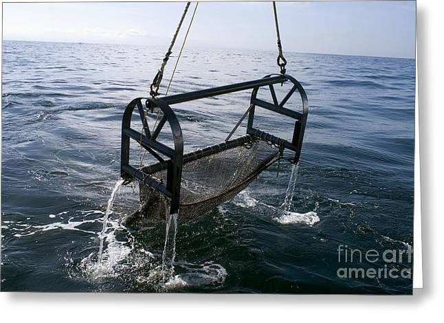 Sampling Greeting Cards - Trawling For Marine Life Greeting Card by Dante Fenolio