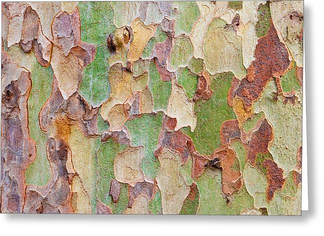 Bark Design Greeting Cards - Tree bark Greeting Card by Tom Gowanlock