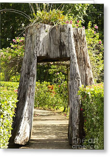 Tree Stump Greeting Cards - Tree tunnel Greeting Card by Blink Images
