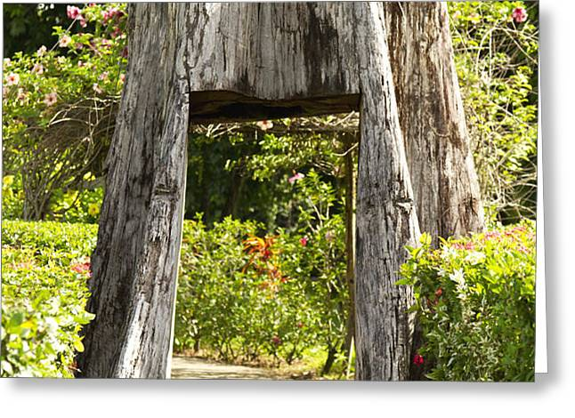 Tree tunnel Greeting Card by Blink Images