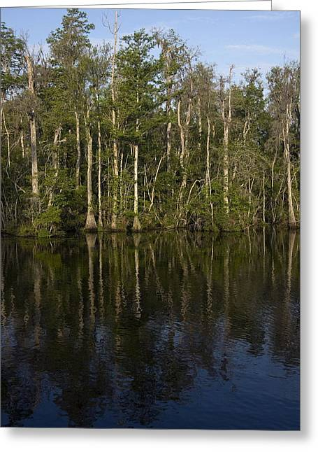 Trees Reflecting In Water Greeting Cards - Trees Reflected Greeting Card by Sally Weigand