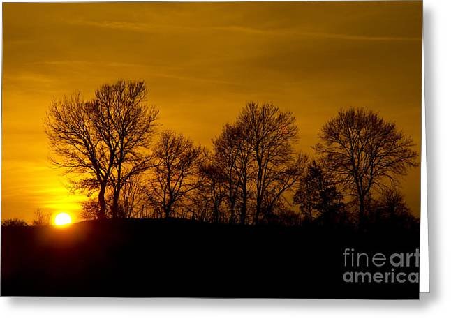 Branch Hill Greeting Cards - Trees with low sun Greeting Card by Mats Silvan