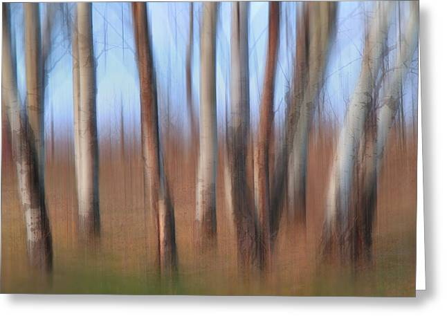 Trembling Greeting Cards - Trembling Aspens Greeting Card by Naman Imagery