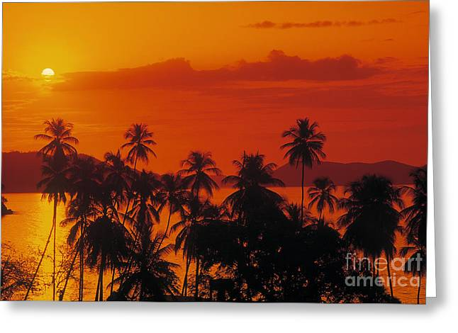 Orangem Tree Greeting Cards - Tropical Beach Greeting Card by Juan  Silva