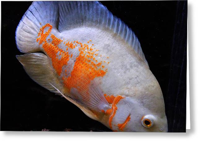 Ston Greeting Cards - Tropical Fish  Greeting Card by Colette V Hera  Guggenheim