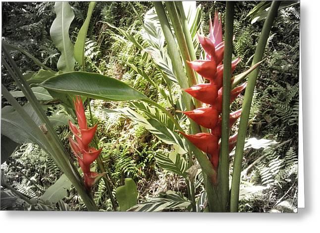 Tropical Flowers Greeting Card by Gina De Gorna