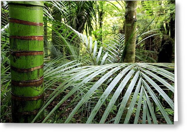 Tropical Vegetation Greeting Cards - Tropical jungle Greeting Card by Les Cunliffe
