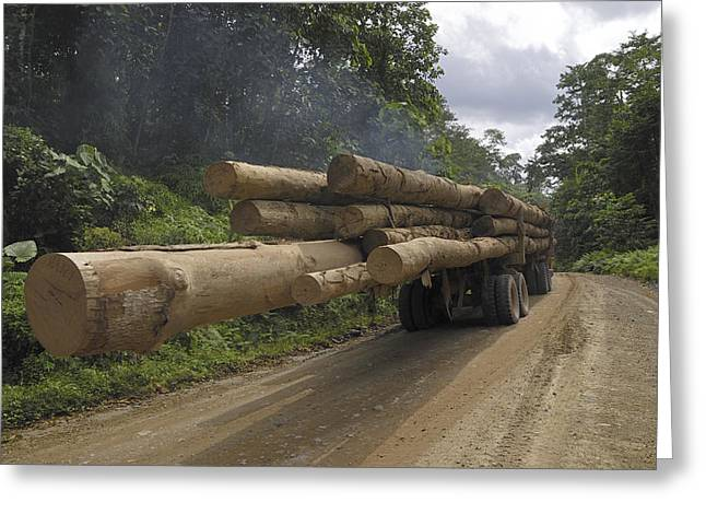 Logging Images Greeting Cards - Truck With Timber From A Logging Area Greeting Card by Thomas Marent
