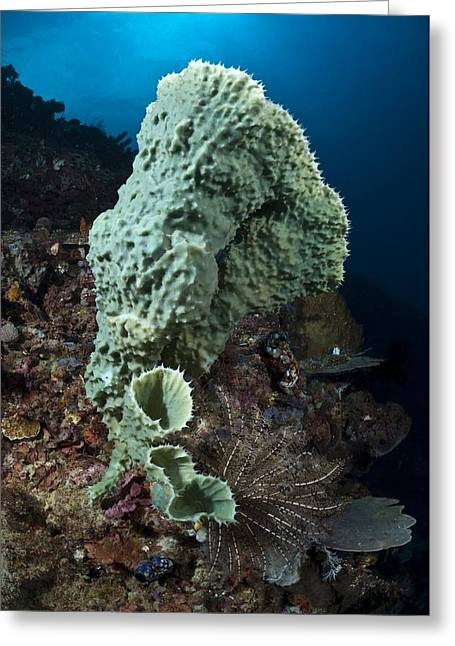 Siliceous Greeting Cards - Tube Sponges Greeting Card by Matthew Oldfield