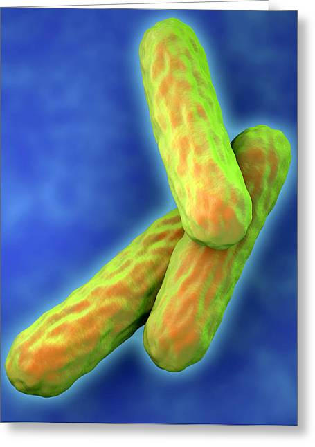 Microbiological Greeting Cards - Tuberculosis Bacteria Greeting Card by Roger Harris