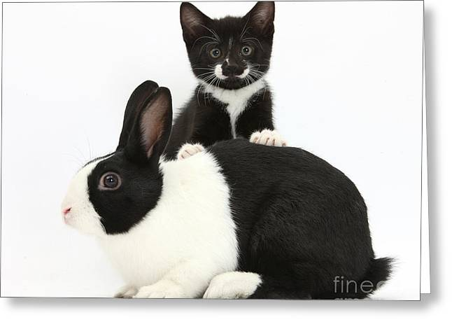 Tuxedo Greeting Cards - Tuxedo Kitten And Dutch Rabbit Greeting Card by Mark Taylor