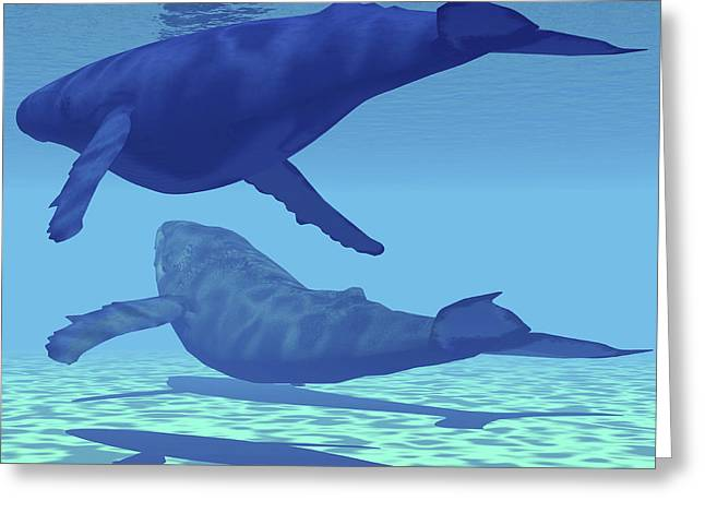 Ocean Mammals Greeting Cards - Two Humpback Whales Swim Together Greeting Card by Corey Ford