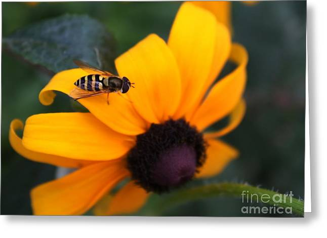 Yellow Jacket Greeting Cards - Two of a Kind Greeting Card by Marjorie Imbeau