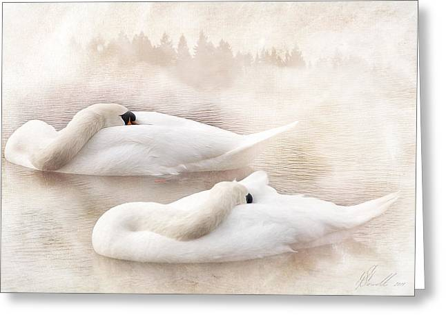 Swans... Digital Art Greeting Cards - Two Swans Greeting Card by Svetlana Sewell